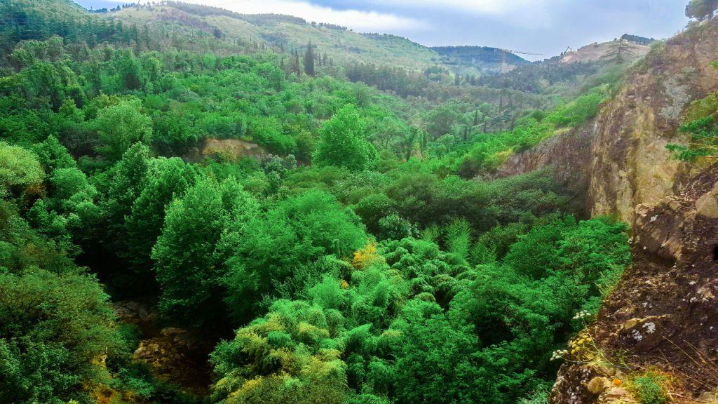 المحمية النباتية كما تبدو من أعلى